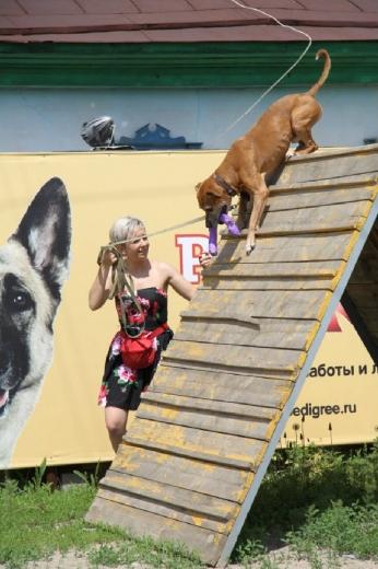 День сильных собак в Новосибирске