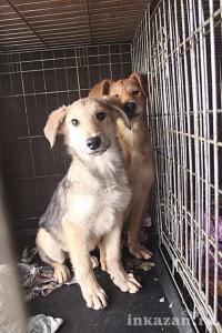 В приюте для бездомных животных под Казанью замерзают 150 собак 1