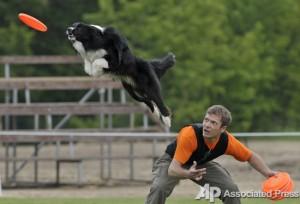 Собаки учатся летать. Чемпионат Венгрии по дог-фризби 1