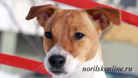 Из всех животных только собаки умеют сопереживать людям