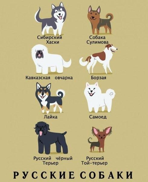 А Вы знаете какой национальности порода вашей собаки?