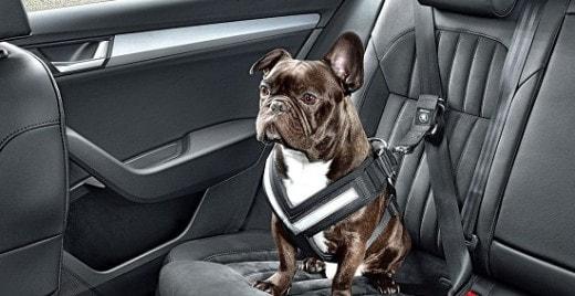Skoda разработала ремень для собак