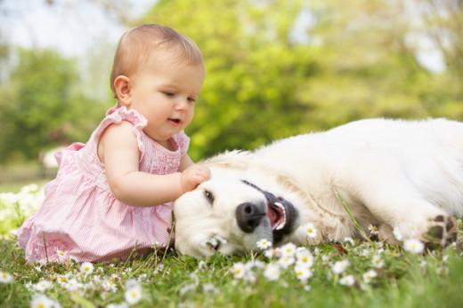 Ученые: Домашние животные снижают риск астмы у детей