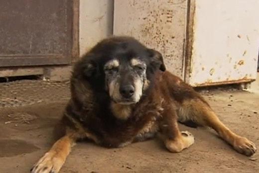 Найдена самая старая собака в мире