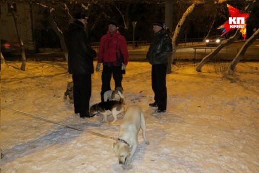 В центре Тюмени снесли единственную площадку для выгула собак