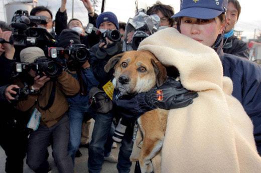 В Башкирии спасли пса, провалившегося в заброшенный подвал