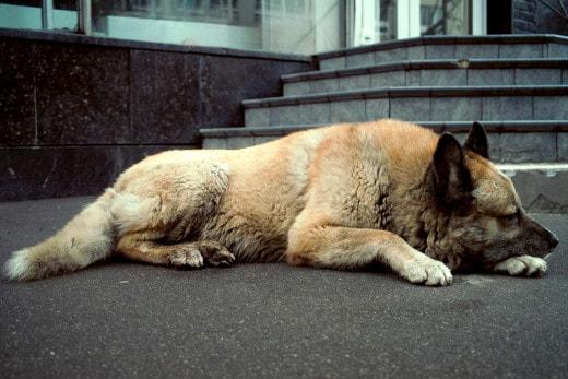 Бездомные собаки спят в греческом кафе