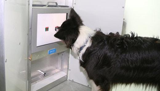 Собаки становятся мудрее с возрастом, заявляют ученые