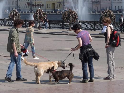 Застройщиков в Москве хотят обязать оборудовать места для выгула собак