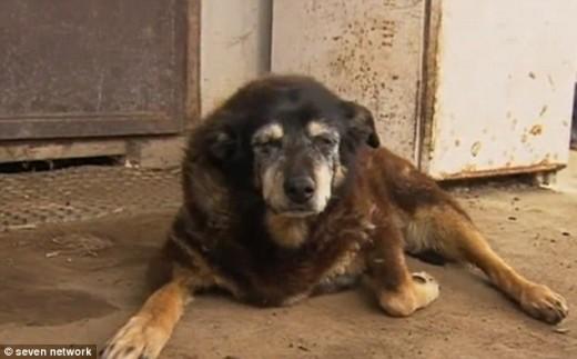 «Самая старая в мире» собака умерла в возрасте 30 лет