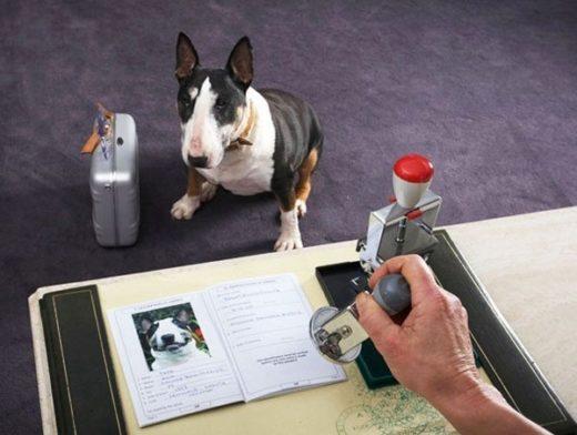 Все кошки и собаки получат паспорта