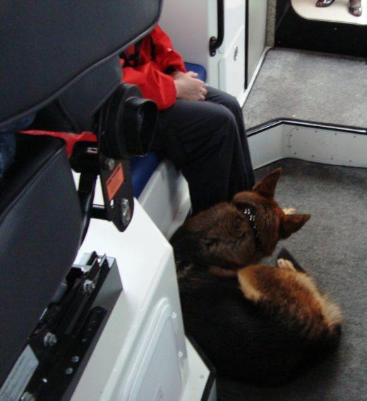 Двое в каноэ и собака чудом выжили в Карелии