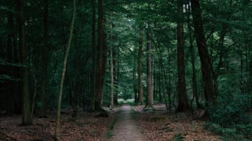 В Забайкалье собака помогла найти заблудившуюся в лесу пенсионерку