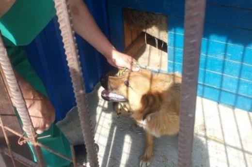 Александр Хлиманков предложил создать в Брянске приют для собак