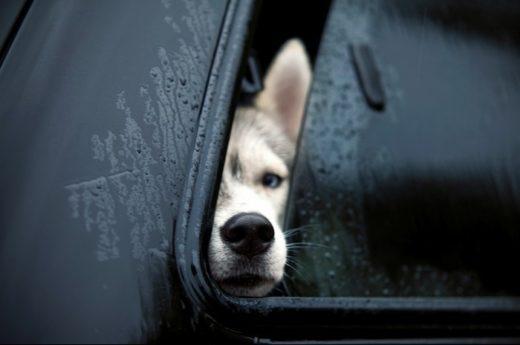 Власти рассказали как в Крым можно ввозить домашних животных