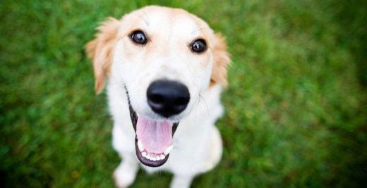 Ученые уличили собак в эгоизме