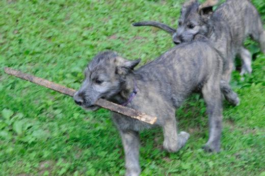 В Южной Африке появились на свет уникальные щенки