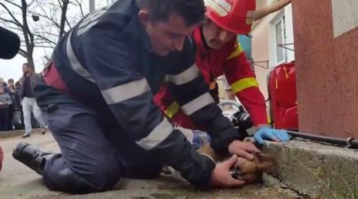 Румынский пожарный спас собаку, сделав ей искусственное дыхание