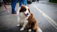 Ученые объяснили, как домашние животные продлевают жизнь человека