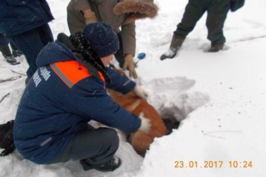 В Череповце спасатели достали из колодца собаку