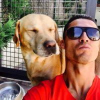 Криштиану Роналду помог спасти 80 собак