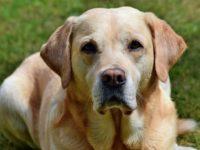 Ученые рассказали, как сопоставить возраст собаки и человека