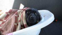 Жители Армавира спасли собаку, которая две недели провела на безлюдном островке посреди реки