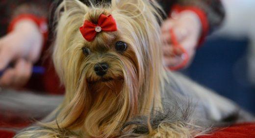 Международная выставка собак Champion Dog Show 2017 пройдет в столице