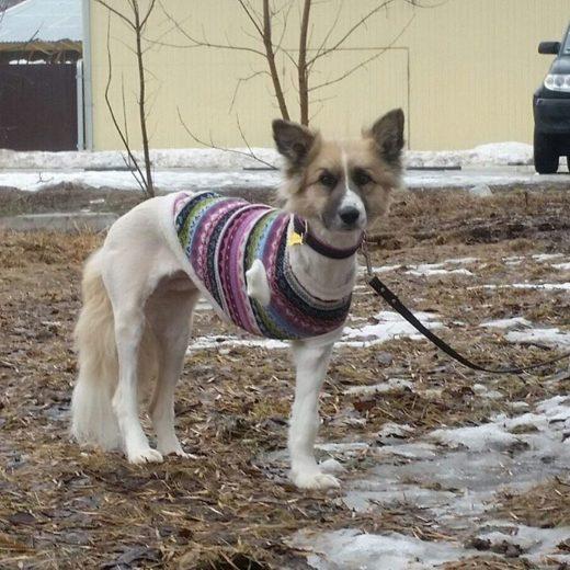 В Твери спустя три месяца поймали трехлапую собаку