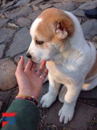 Общение с собаками полезно для здоровья - ученые