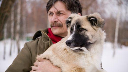 Генетики связали дружелюбие собак с «синдромом эльфа»
