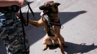 Метро Москвы обучит более 80 собак–поводырей