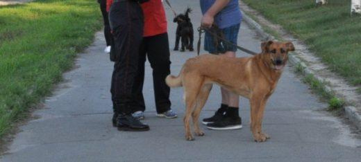 Площадка с тренажерами для собак появится в Петрозаводске к концу месяца