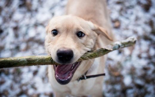 Раскрыта загадка дружелюбия собак