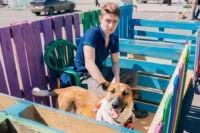 В Ярославле пройдет акция-раздача бездомных собак