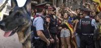 Испанских полицейских собак не пустили на мероприятие для животных в Каталонии