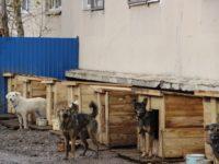 В Перми могут построить новый приют для бездомных собак