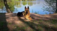 В Югре служебная собака привела к квартире недоброжелателя