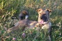 История удивительного животного: в Сызрани ищут хозяев для собаки, лишившейся лапы