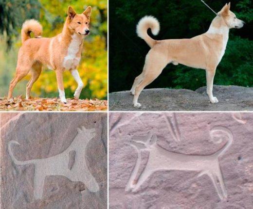 В Саудовской Аравии обнаружены древнейшие изображения собак