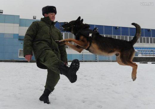 Служебные собаки Росгвардии надежнее электроники