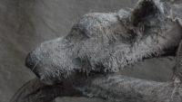 Художница создает реалистичные скульптуры животных из льна