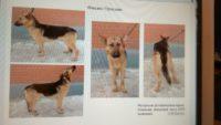 Неравнодушные тюменцы спасли от смерти списанных собак из войсковой части 3059