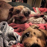 """""""Несчастный песик"""": в Сети обсуждают оптическую иллюзию с собакой"""