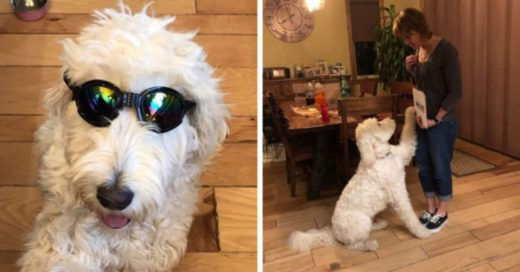 Собаку научили читать, и теперь она выполняет команды без слов