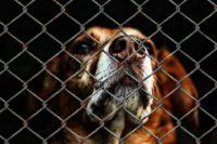 Муниципальный приют для собак и кошек появится в Новороссийске