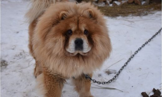 В Ярославле создадут семь новых площадок для выгула собак