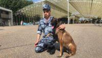 Полиция Петербурга потратит полмиллиона рублей на служебных собак