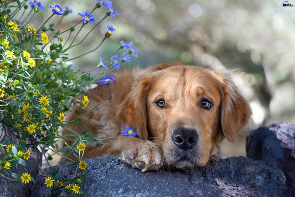 Как Google Maps спас бездомную собаку