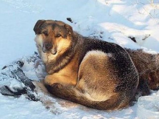 Собачья преданность: две недели пёс не отходил от замерзшей подруги 1